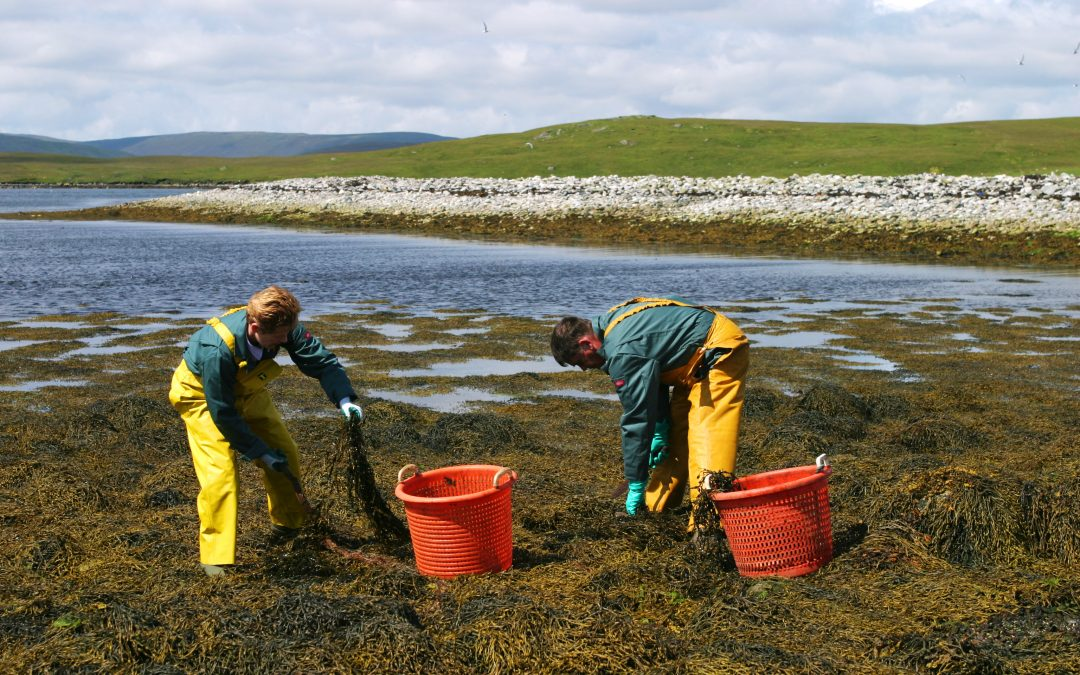Seaweed Fertiliser